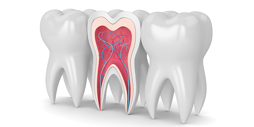 basic tooth structure